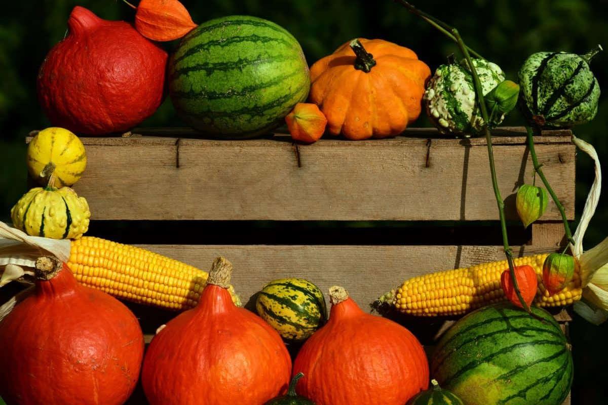 L'agriculture bio et le rôle de l'innovation