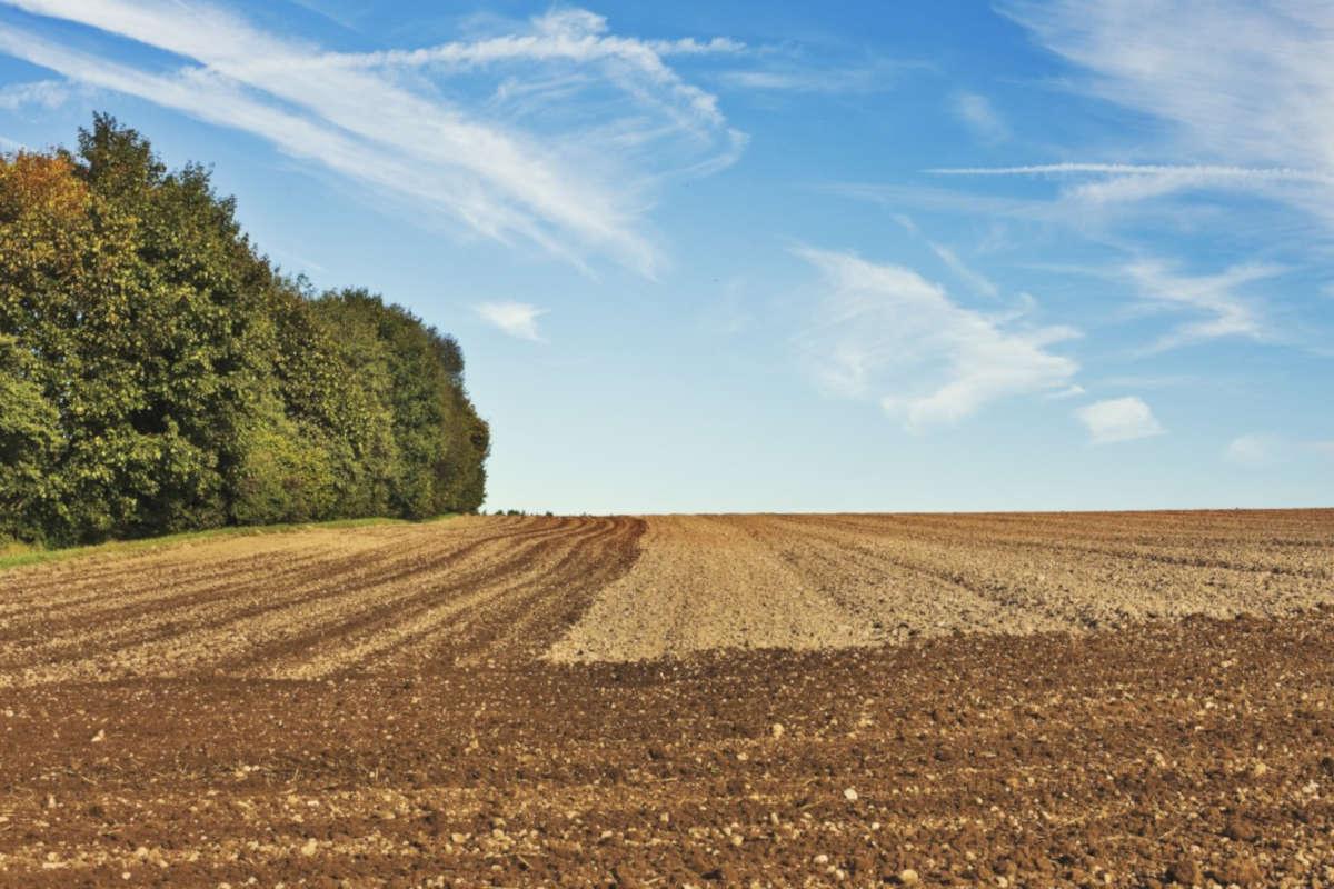 Agriculture biologique ou agriculture moderne ?